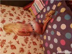 Blonda noua